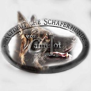 Altdeutsche Schäferhunde von Camelot